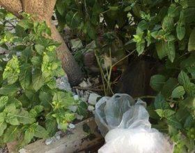 Photo of GIUDICE: la pulizia della città non è considerata una emergenza